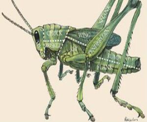 Insect Farming Winning Idea